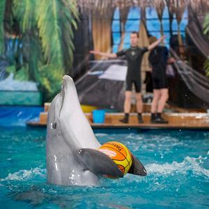 Дельфинарии, океанариумы Можайска