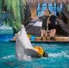 Дельфинарии, океанариумы в Можайске